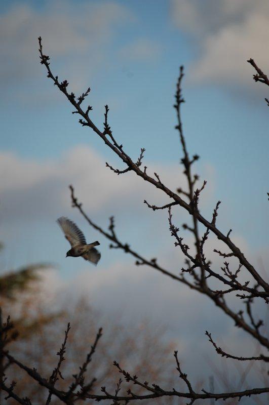voici un echantillons des oiseaux qui me rende visite en se moment