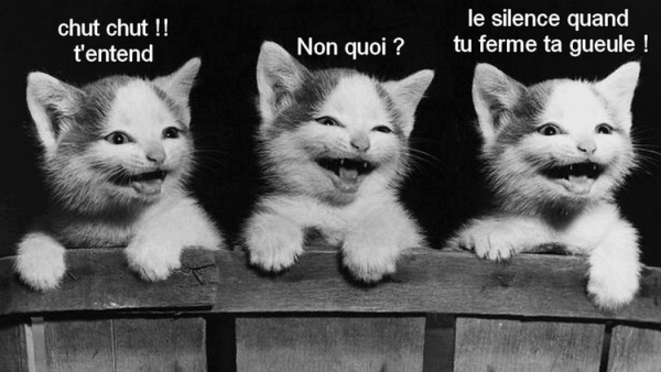 blague entre chats!!!!!XD