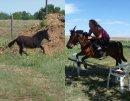 Photo de I-love-my-ponies--xD