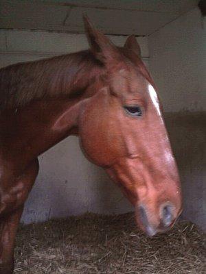 Un des chevaux du club...