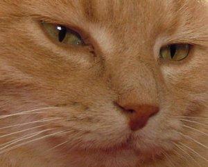 Oh, les beaux yeux de chat...