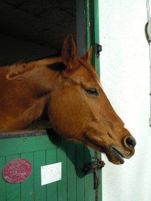 Petite présentation de certains chevaux du club de Neuvic !