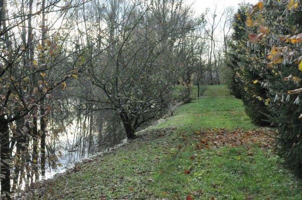 quelques photos de l'étang dont le niveau de l'eau a bien monté !!!