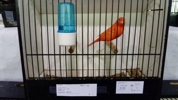 mes oiseaux au concour de serifontaine