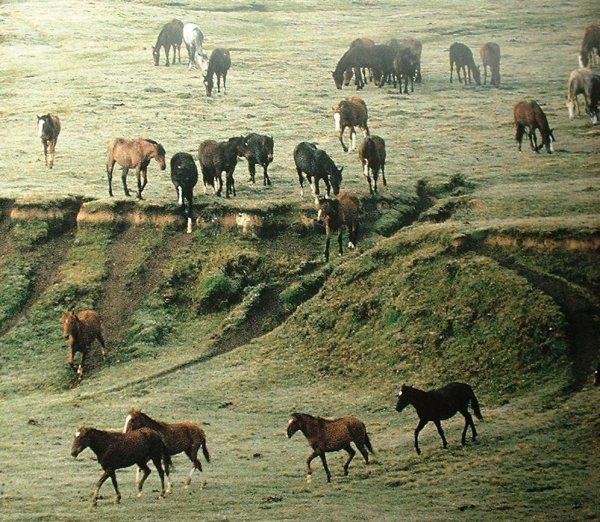 L'histoire du cheval