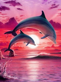 dolphin painting sunset