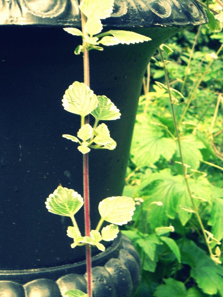 Chevetogne ! Pot de fleurs !