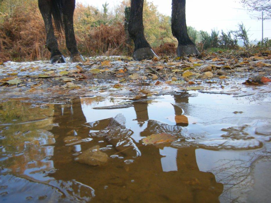 Blog de Espoir-my-Horse