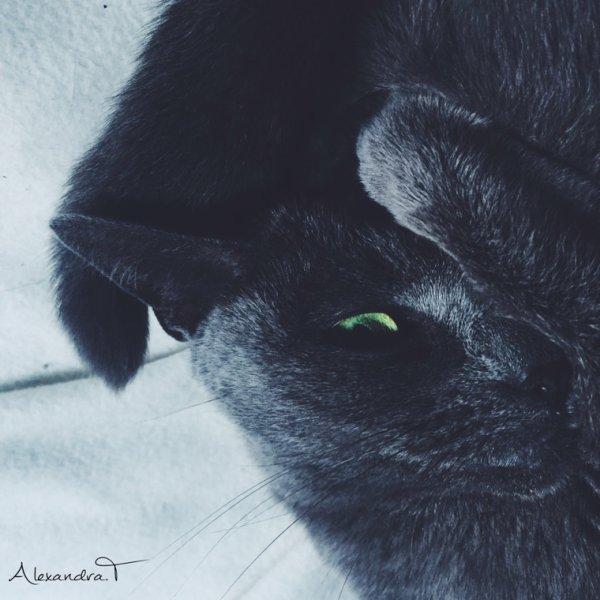 A model cat ♡