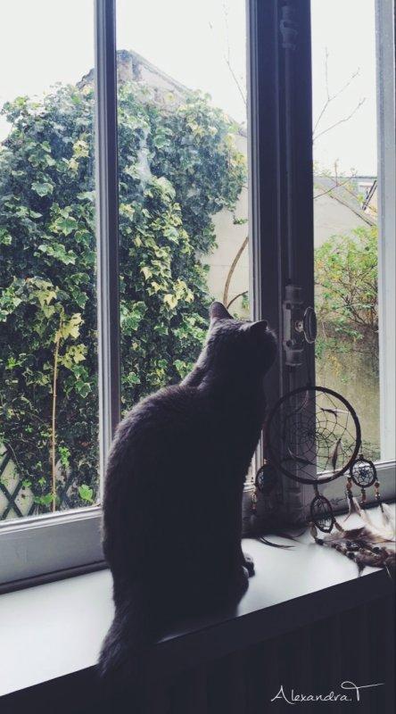 Mon chat encore et toujours ♡