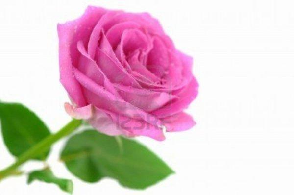 La Rose !!