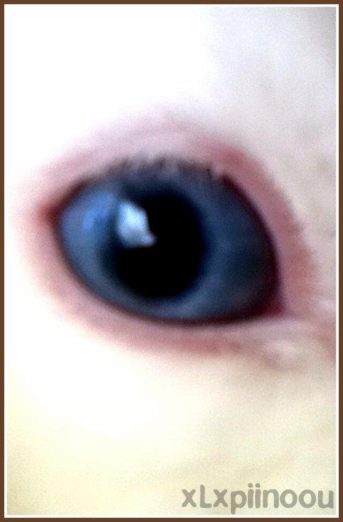 Les plus beau yeux de mon coeur ... ♥.