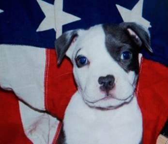 b b staff avec le drapeau americain voila un blog avec. Black Bedroom Furniture Sets. Home Design Ideas