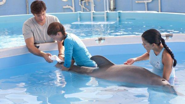 bienvenue dans le blog des dauphin de christelle