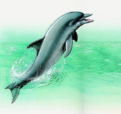 bienvenue dans le mmonde des dauphin de christelle
