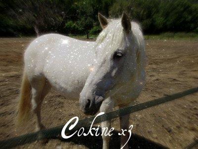 Mon poney d'amoor
