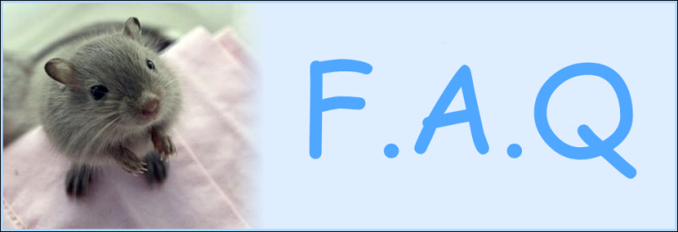 F.A.Q