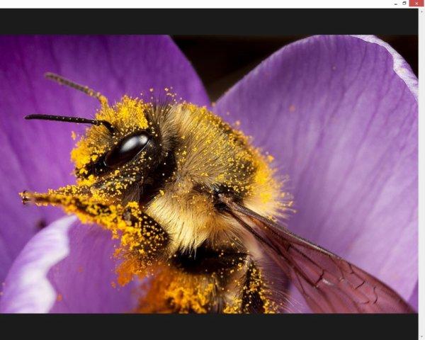 Tiens,un abeille qui passe !