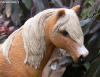 PicturesOfSchleich