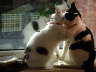 even cats love one other!!