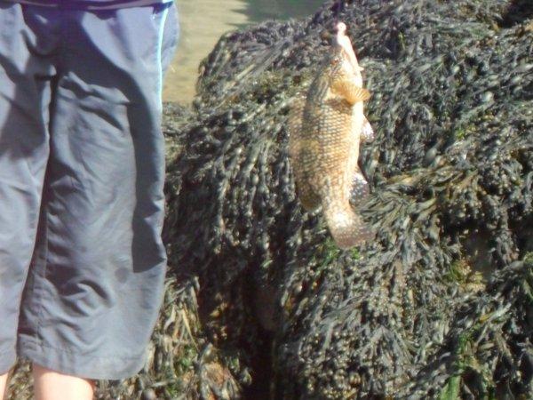 Pêche en rockfishing:
