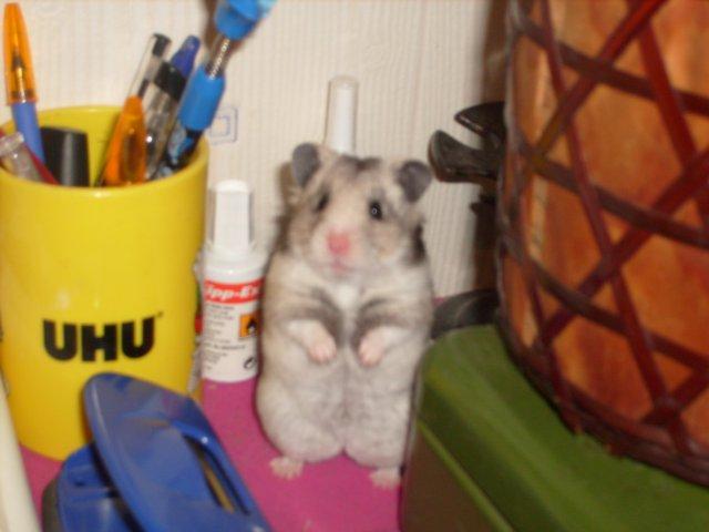Blog de x-HamsterS-x24