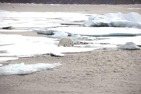 En été d'ici quelque dizaines d'années ces photos ne seront plus visible en Artique ou trés rare ( été dans l'hémisphére nord )