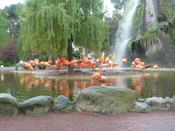 Journée zoo de La Palmyre ( 17 )  photos prises le 10 Avril 2011 ( les 41 plus belle photos de cette journée sont à suivre )