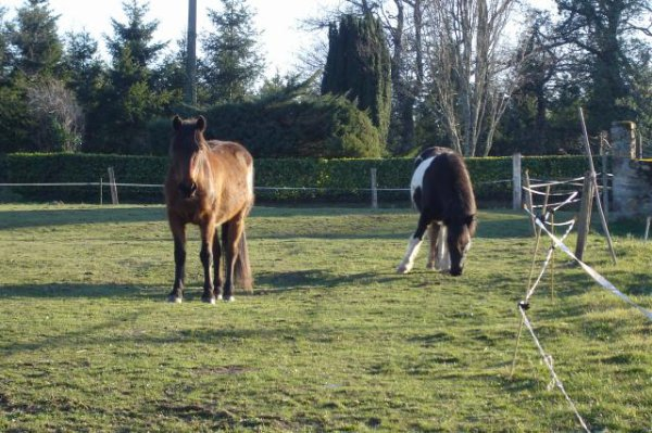 petits poneys ♥