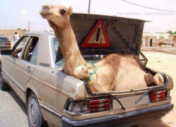 Bienvenue à Nouakchott.