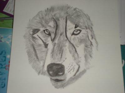 Dessin tete de loup blog de louveteau005 - Tete de loup dessin ...