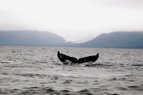 «Vagabonder à la surface des océans est souvent source de sérénité et, parfois, permet de tutoyer ses rêves. S'y immerger, c'est s'ouvrir à son observation et à sa compréhension.» Nicolas Hulot