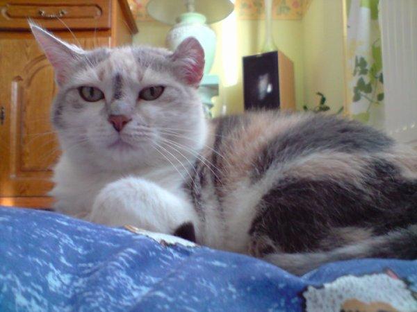 Clochette un adorable chat qui ne mériter pas de partir au si loin de nous :(