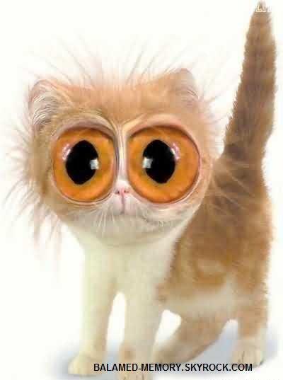 Chat qui fait les gros yeux