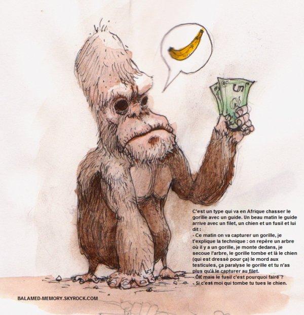 BLAGUE : Chasse aux gorilles