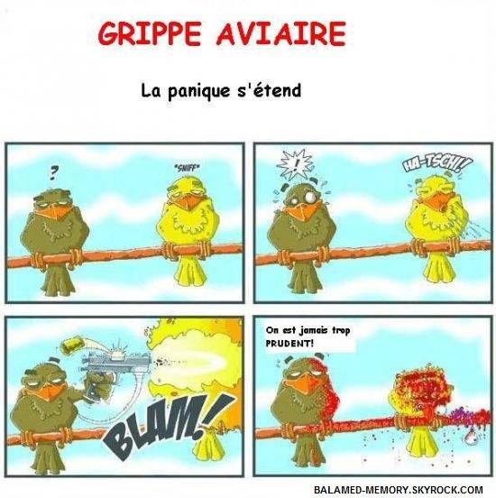 HUMOUR DE LA SEMAINE  : Panique aviaire
