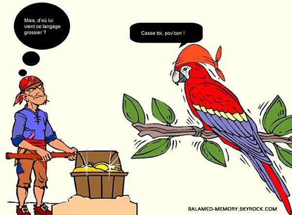 BLAGUE DE LA SEMAINE : Perroquet bilingue