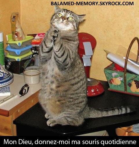 HUMOUR DE LA SEMAINE : Mon Dieu, ma souris