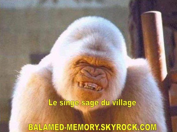 HUMOUR DE LA SEMAINE : Le singe sage du village