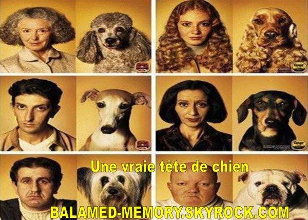 HUMOUR DE LA SEMAINE : Une vraie tête de chien