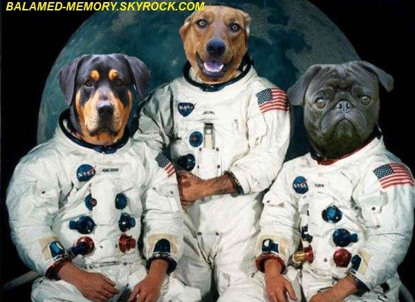 HUMOUR DE LA SEMAINE : Chiens astronautes