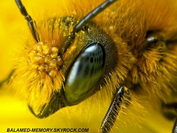 INFO-INSOLITE : La Russie avertit les États-Unis  la disparition des abeilles provoquerait une 3ème guerre mondiale