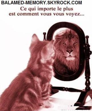 HUMOUR : Chat lion