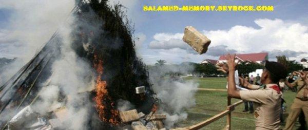 BUZZ : La police indonésienne brûle 3,3 tonnes de cannabis ce qui a rendu tout un quartier défoncé !