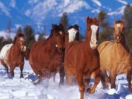 un bant de chevaux trop beau
