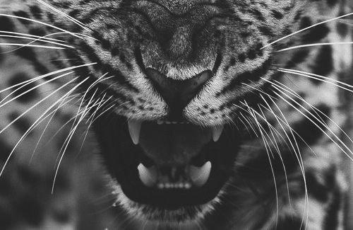 ~ Into the Wild ~