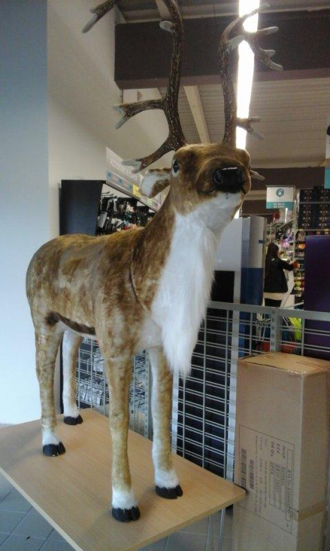 un immense cerf au magasin Centrakor à Clermont l'Hérailt , bonne journée