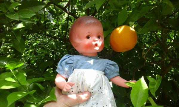 Oups! Des oranges!