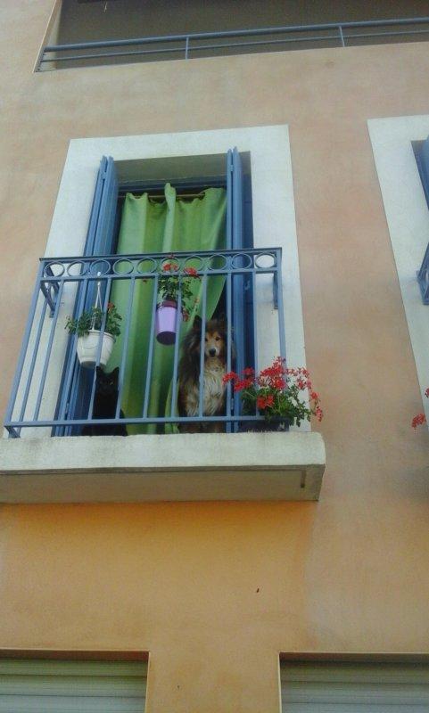Il y a du monde au balcon....Bon jeudi