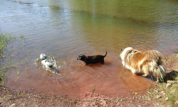 """""""Oh ben voui """"cela fait du bien un petit bain au Lac du Salagou. ....."""